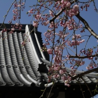 Discover Beauty and Wonder in JAPAN with PicMil